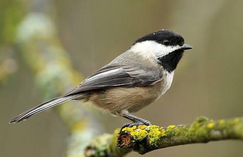 Birds of Wisconsin
